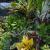 Germinatrix, Plant Hunter