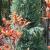 Installing Gardens – COLOR!