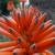 Roadside Aloe Pitstop