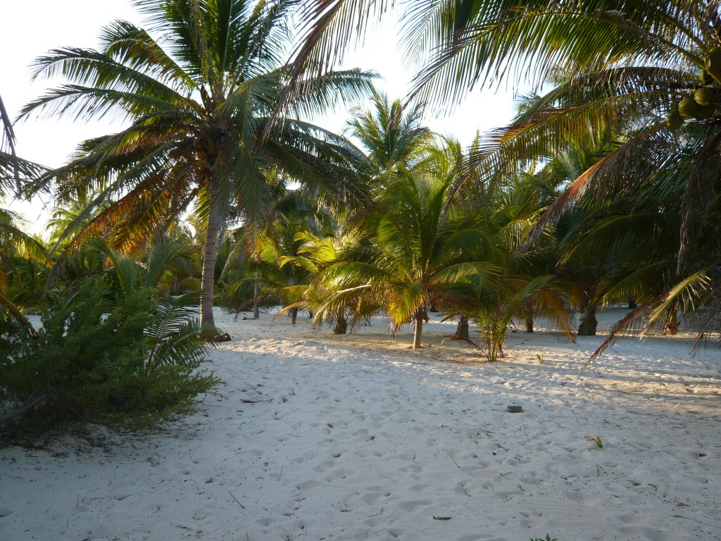 paradise, found ...