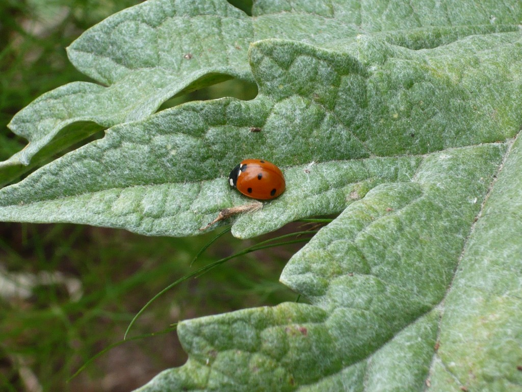 a little lady posing on an artichoke leaf