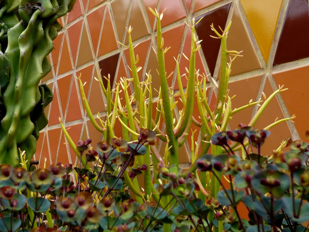 euphorbia 'stix on fire' - best plant name ever