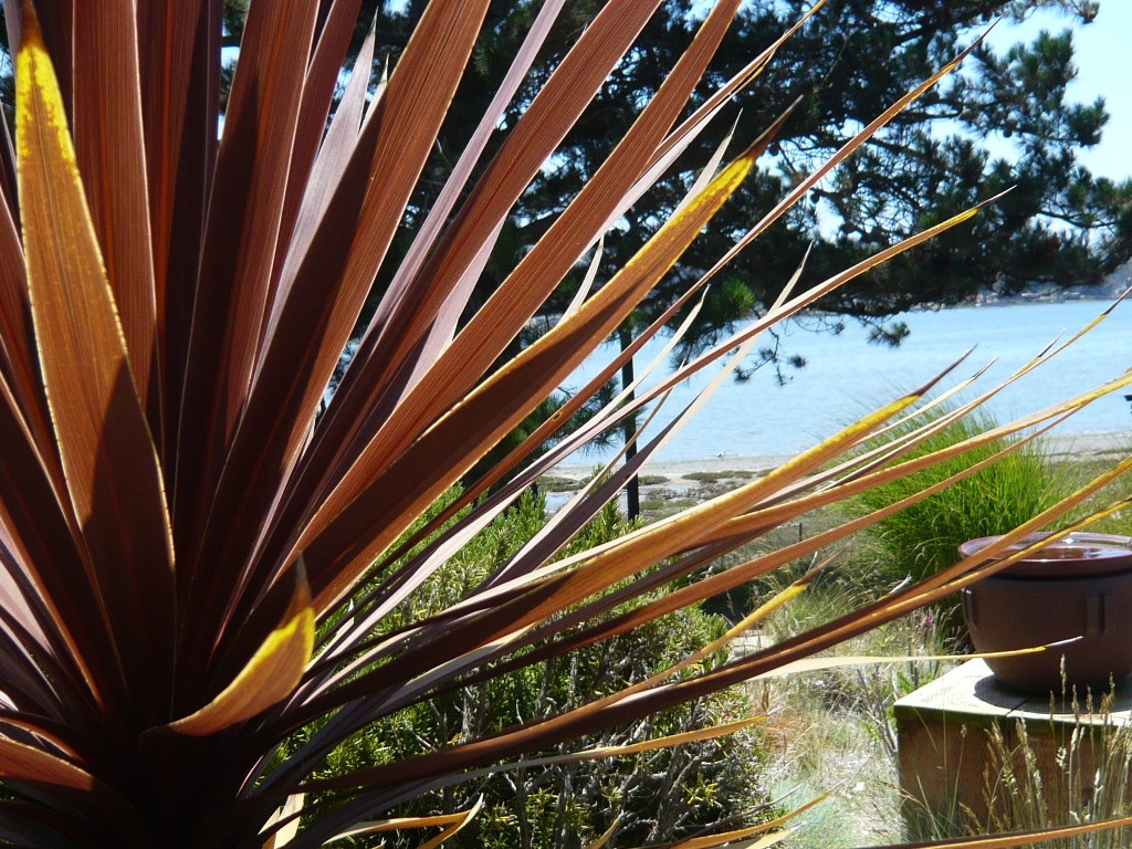 the bay, seen through cordyline leaves