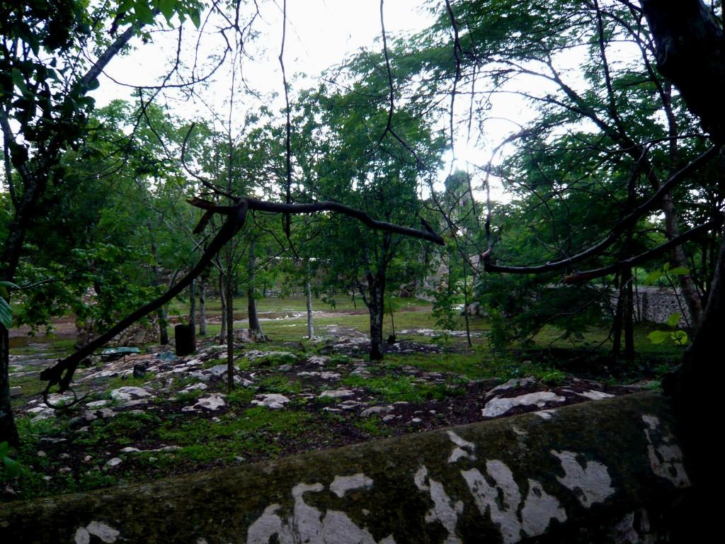 the slender trees volunteered themselves inside the ancient hacienda walls