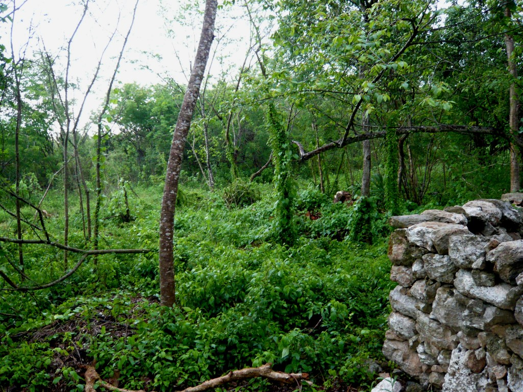 the jungle around the site - it's out of a dream, isn't it?