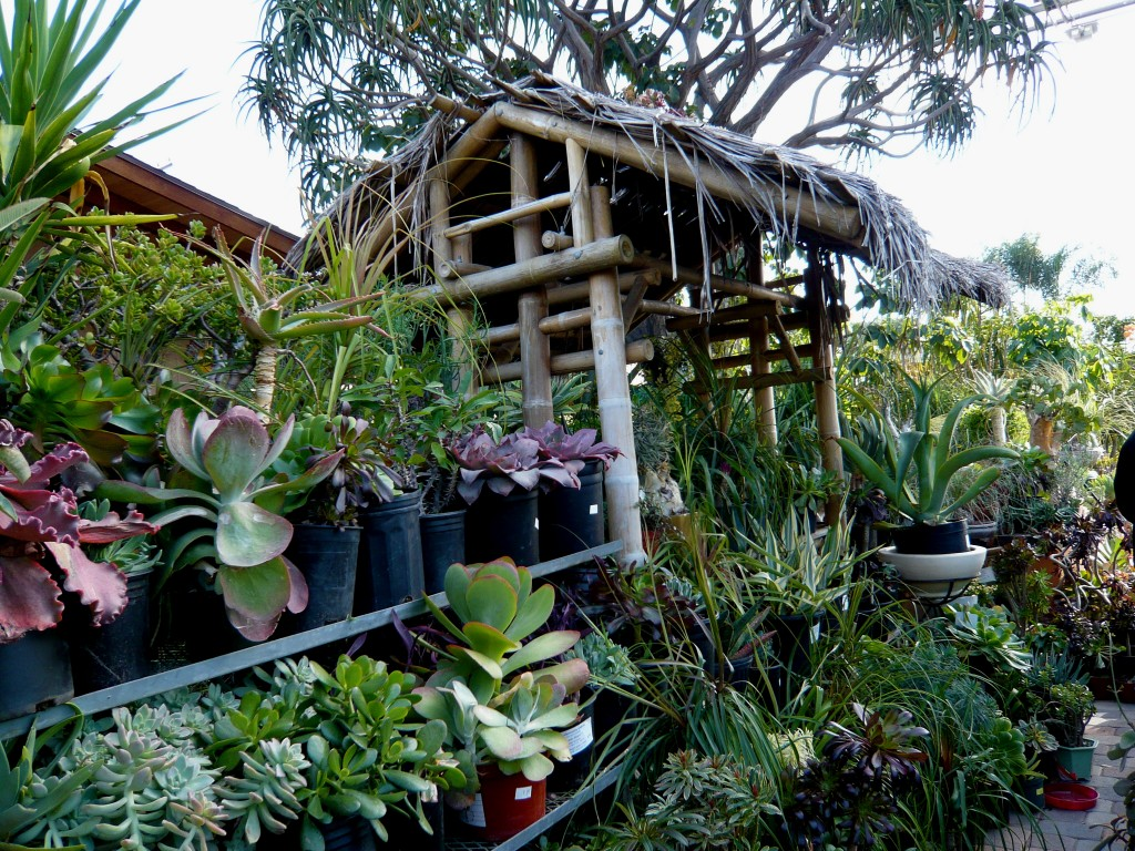 the one nursery in los angeles I can really get behind: california cactus center