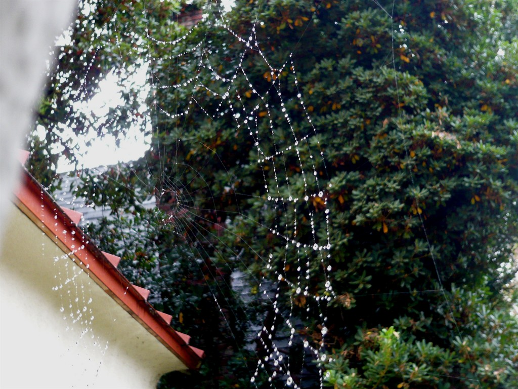 look! a sky necklace made of spiderweb and raindrops!