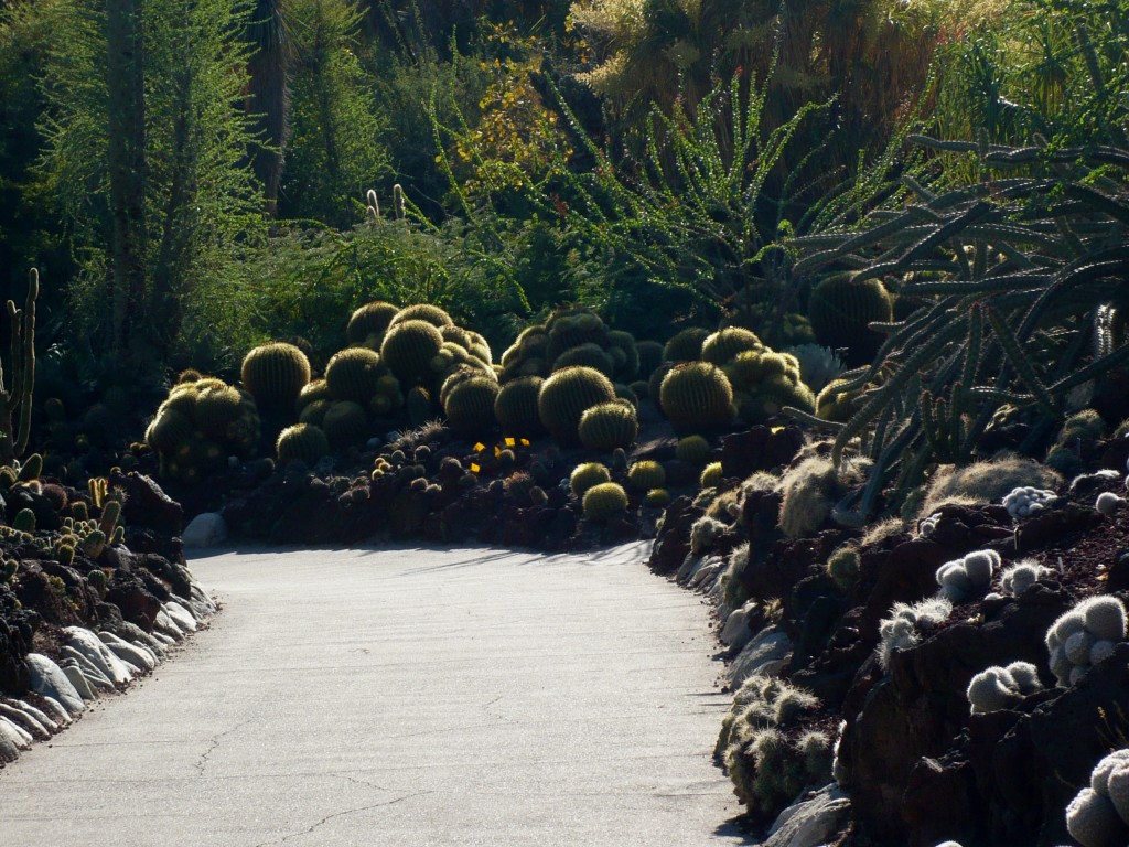 strolling down a prickly path - how cool is THIS?
