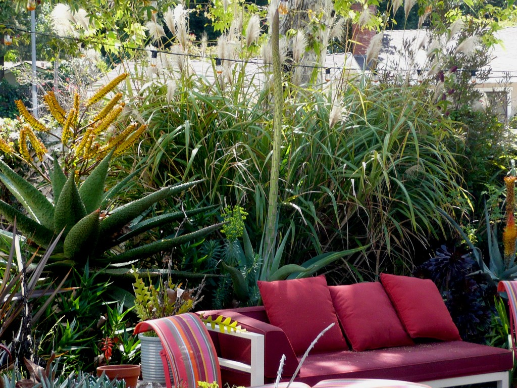 blooming aloes, blooming agaves, blooming grasses- this is the garden I have...