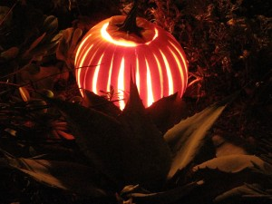 This striated pumpkin gently illuminates the bold outlines of a small whale's tongue agave