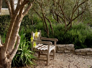 don't you just want to sit down under the olive trees, smelling the lavender, and enjoy?