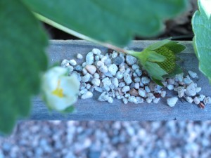 teensy weensy polished granite looks like cous cous