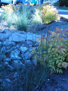 slope, rocks, and plants - a recipe for a good, active ditch!