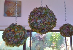 who can resist these orbs of succulent delight?