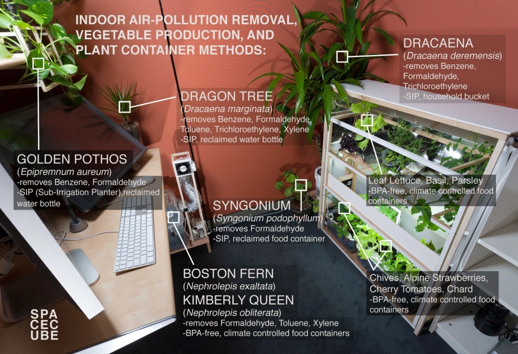 plants for office cubicle. The Run Of Mill Office Cubicle Plants For