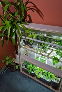 shelving with grow lights and SNACKS !