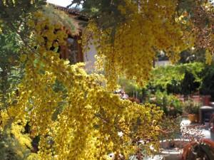 pretty flowers decorating an already pretty tree!